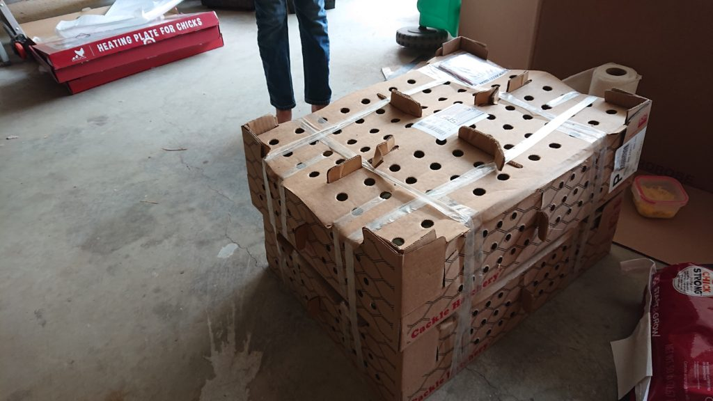 Large shipping box for small livestock